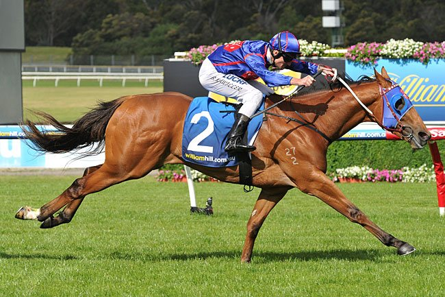 Image result for mahuta horse