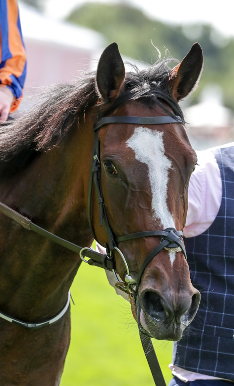 magic wand heads o brien s bid for 40th irish classic win