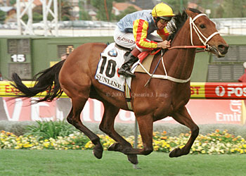Image result for sunline horse